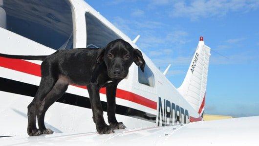 puppyplane